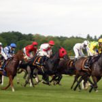 Animals' Health – Racing Horses